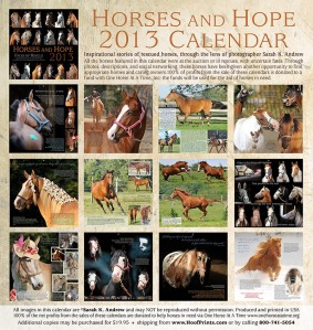 Raise money to save horses from slaughter and get this beautiful calendar.